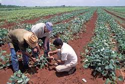 En Cuba, la economía en función de la política
