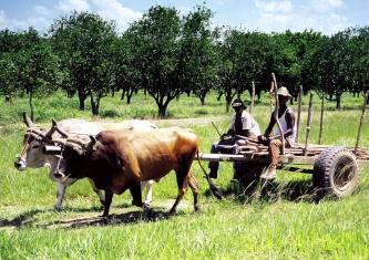 La misma Revolución Agraria de Fidel